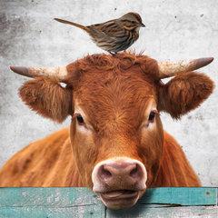 Dieren behang enzo
