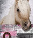 muursticker paard detail
